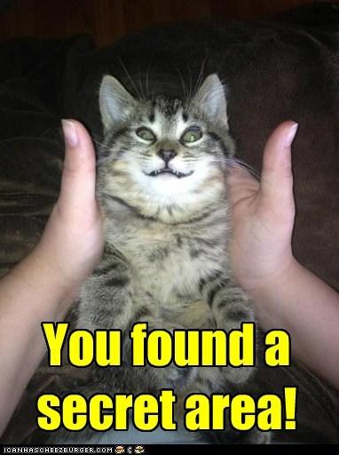 cat pets rubs scritches funny - 6998497024