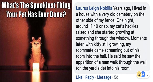people sharing the spookiest things their pets ever did