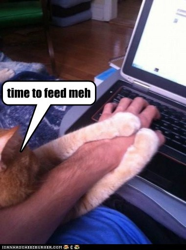 cat hungry internet computer food funny - 6998886400