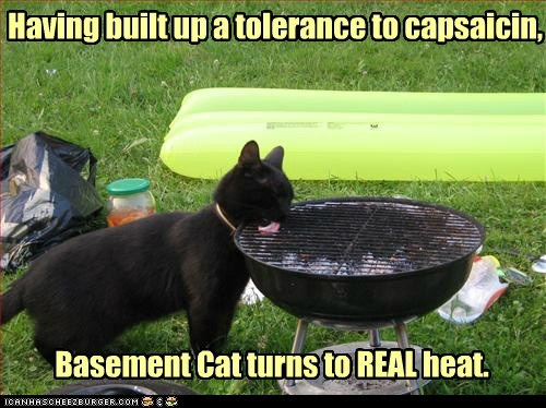 Having built up a tolerance to capsaicin, Basement Cat turns to REAL heat.