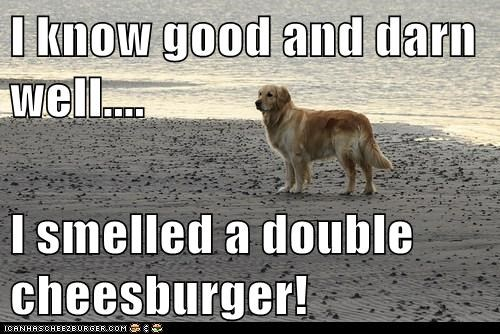 Cheezburger Image 6999572992