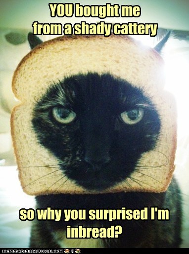 YOU bought me from a shady cattery so why you surprised I'm inbread?