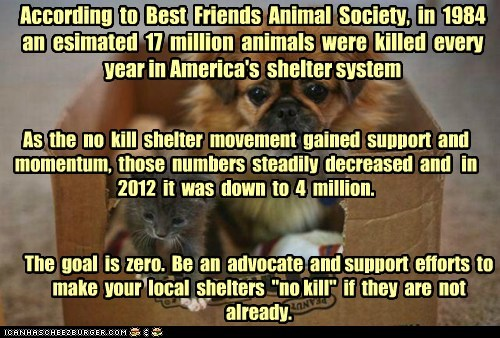 "According to Best Friends Animal Society, in 1984 an esimated 17 million animals were killed every year in America's shelter system As the no kill shelter movement gained support and momentum, those numbers steadily decreased and in 2012 it was down to 4 million. The goal is zero. Be an advocate and support efforts to make your local shelters ""no kill"" if they are not already."