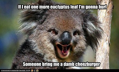 cheezburger,hungry,tired,koalas,hurl,food,eucalyptus