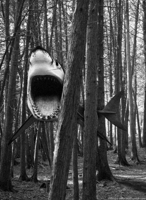 woods,expect,shark attack