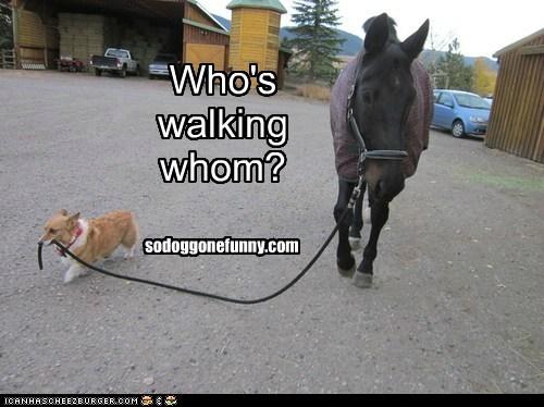 Who's walking whom? sodoggonefunny.com