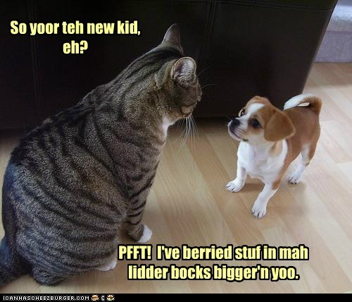litterbox,dogs,bully,puppies,new kid,Cats