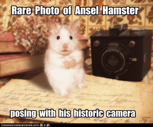 Rare Photo of Ansel Hamster posing with his historic camera