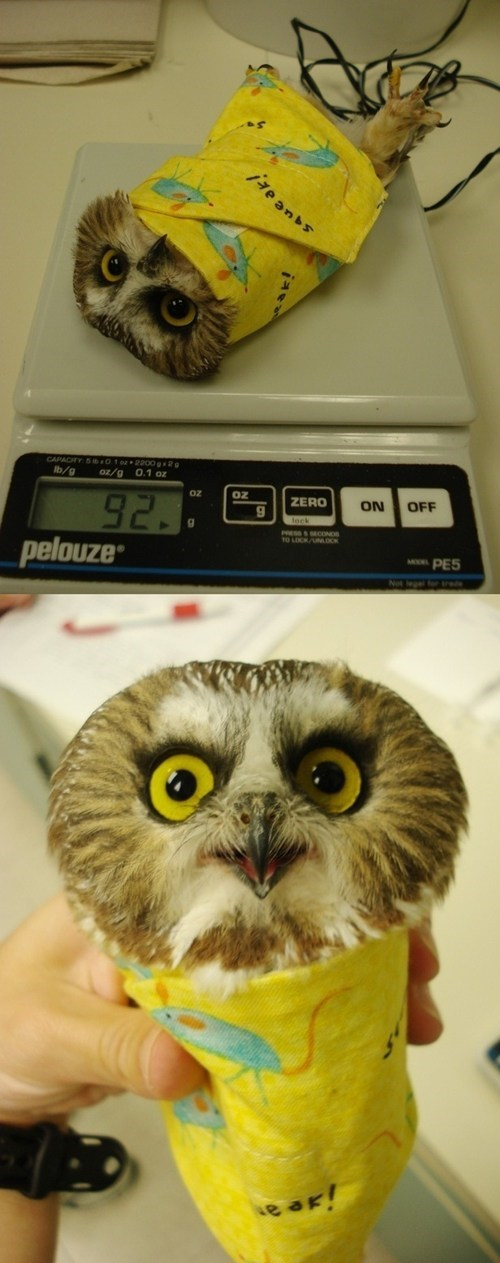 scale birds burrito wrap weigh Owl squee