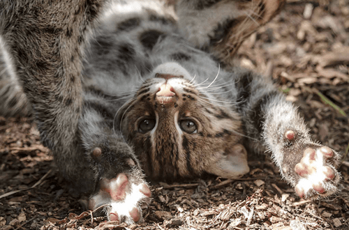 Babies fishing cats squee spree squee upside down
