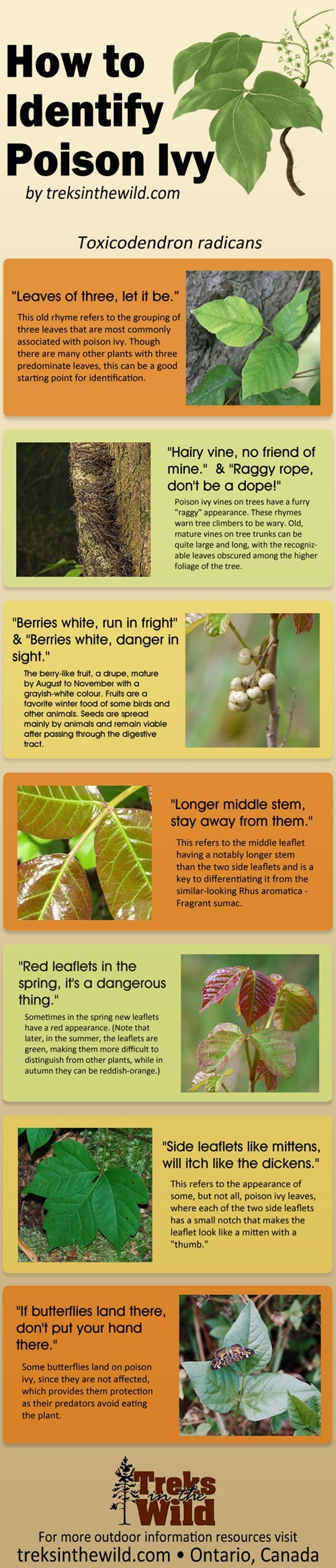 nature poison ivy infographic - 7000334592