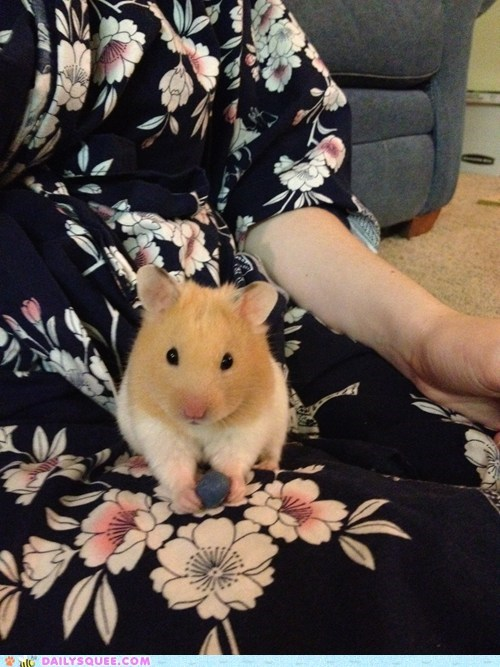 reader squee pets Fluffy cute hamster squee - 7000360448