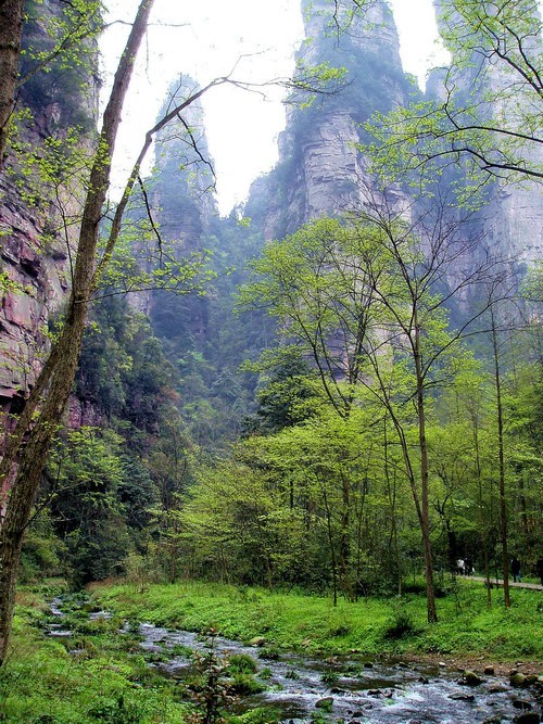 Forest China landscape