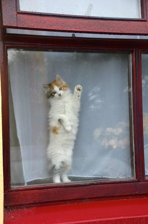cyoot kitteh of teh day bye goodbye paw friend farewell Cats window