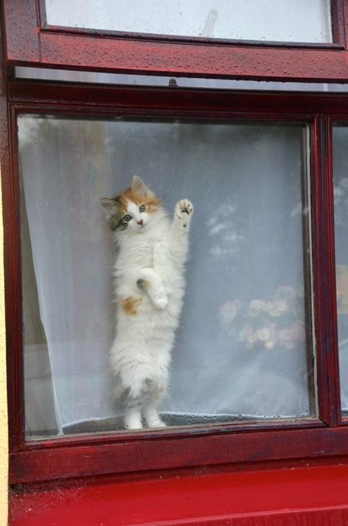cyoot kitteh of teh day bye goodbye paw friend farewell Cats window - 7000545280
