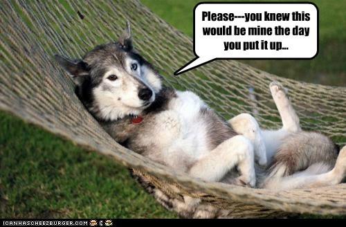 dogs hammock mine huskies greedy - 7000778496