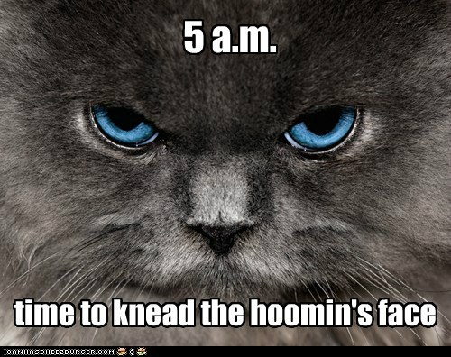 5 a.m. time to knead the hoomin's face