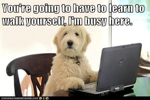 dogs walks working computer busy what breed - 7000930048