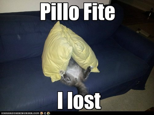 cat pillows couch fight funny - 7001070848