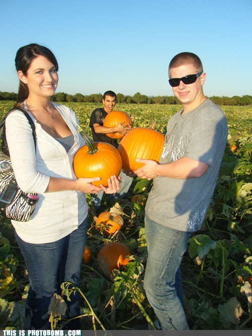 pumpkins,evar,biggest,couple