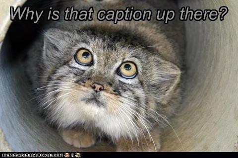 meta caption lynxes why - 7001520896