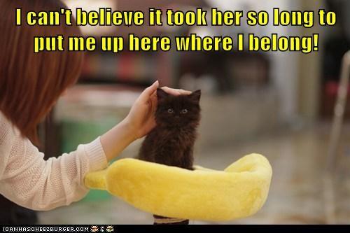 cat kitten kitty funny obey - 7001645312