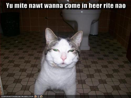 cat bathroom toilet funny