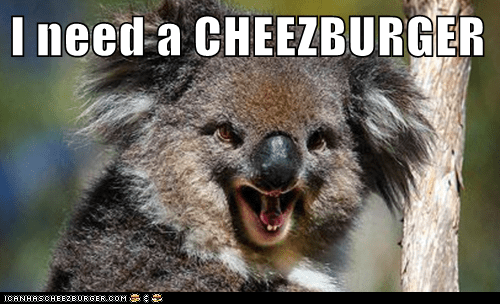 Cheezburger Image 7002802688