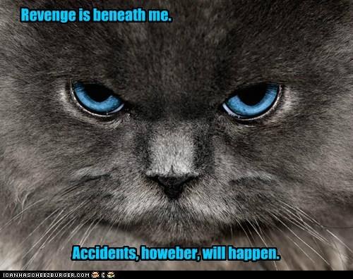 cat revenge accident funny - 7002819072