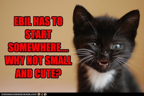 cat kitten evil cute kitty funny - 7002832384