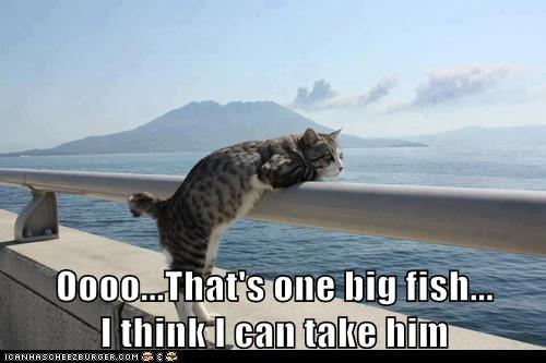 cat water fish boat funny - 7002906880
