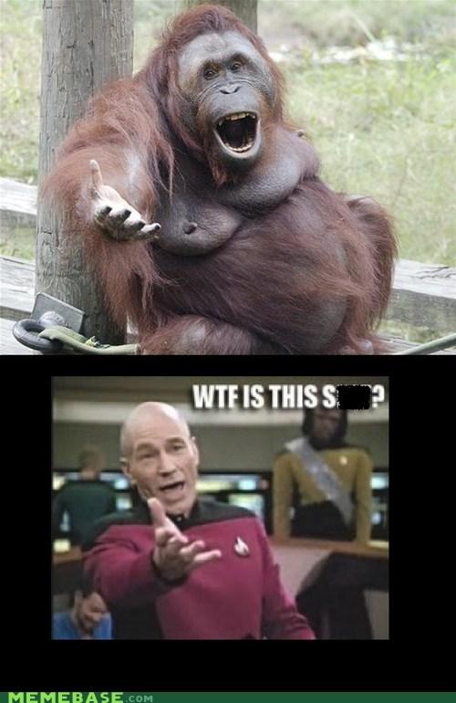 picard,orangutan,wtf picard