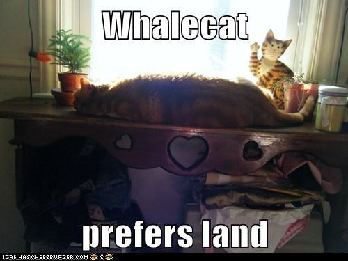 Whalecat  prefers land