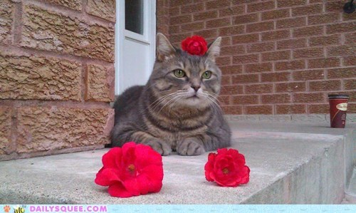 reader squee pets flowers Cats squee - 7003391488