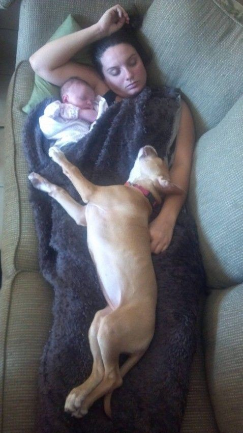 baby,mom,dogs,sleeping
