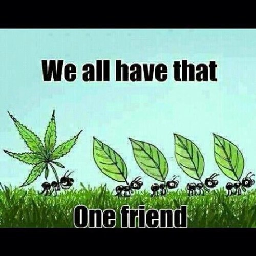 marijuana,that one friend,that guy