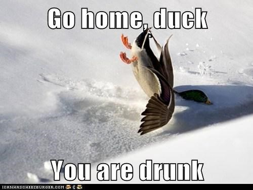 go home your drunk,duck,crashing,snow,falling,flying