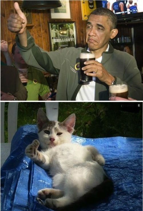beer,obama,thumbs up,Cats