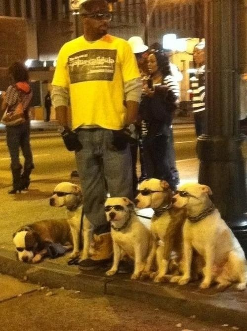 street,dogs,glasses
