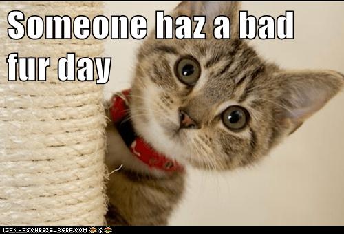 Someone haz a bad fur day
