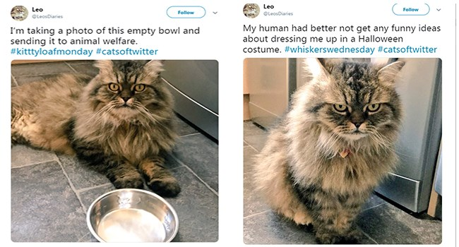 funny twitter cats
