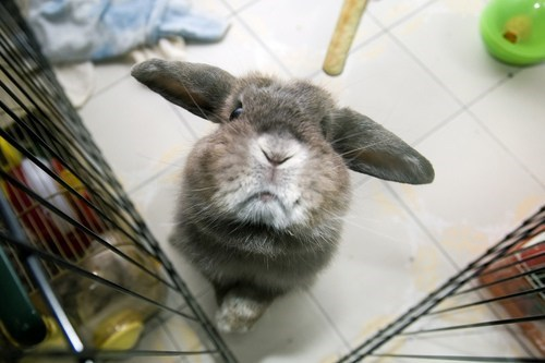 Bunday,boops,sniffing,close up,noms,rabbit,bunny,whiskers