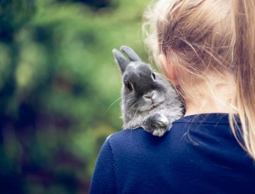 Bunday shoulder comfort hugs rabbit bunny squee - 7004282880
