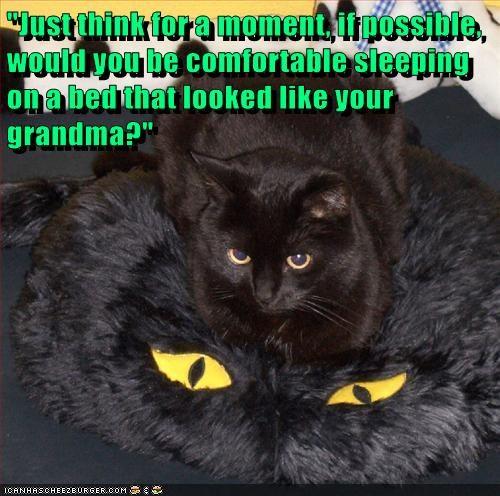 cat grandma funny - 7004538624