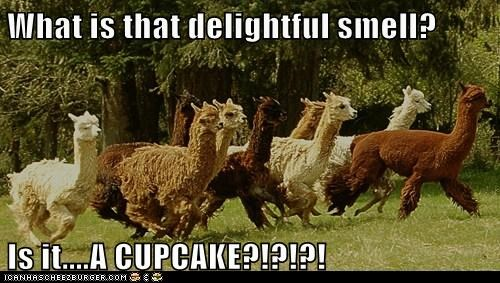 What is that delightful smell? Is it....A CUPCAKE?!?!?!
