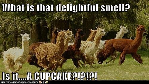delightful smell cupcake running llamas - 7004754944