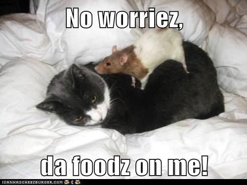 rats on me puns no worries food Cats literally - 7004804096
