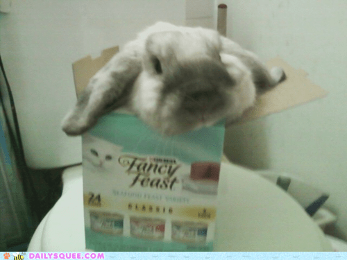 Bunday bunnies reader squee pets box squee rabbits - 7004834048