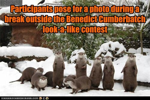 benedict cumberbatch,lookalike,otters,Photo,contest