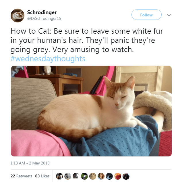 twitter funny tweets Cats funny - 7005445